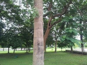 Squirrels in the memorial garden