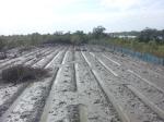 Mangrove plantation in Dobanki Camp