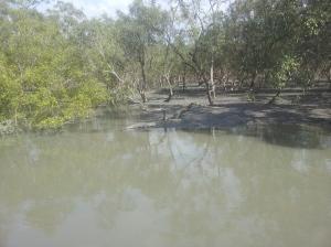 Crocodile at Sundarbans National Park