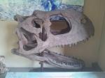 Dinosaur skull at Indian Museum