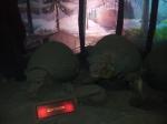 Glyptodons
